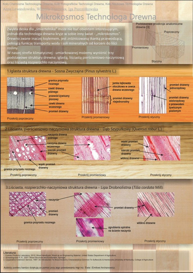 ewa archanowicz-identyfikacja drewna