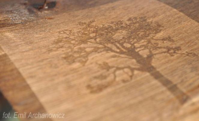 kalitypia drzewo