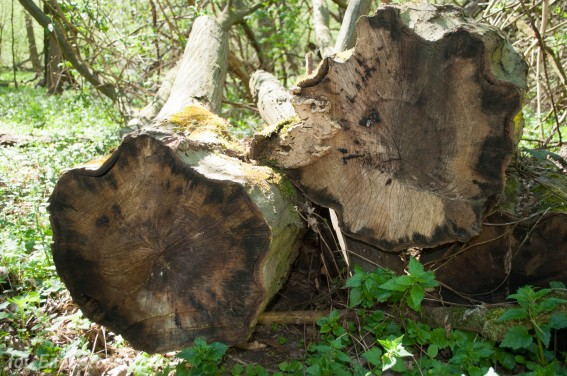 martwe drewno