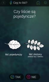 pytanie o rodzaj liścia