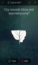 pytanie o nasadę liścia