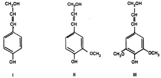 lignina