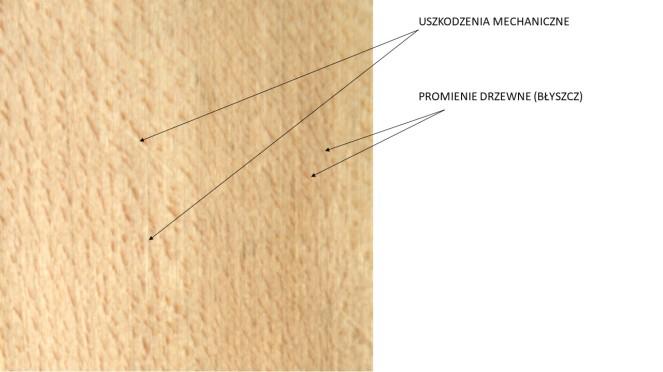 drewno lipy przekrój styczny